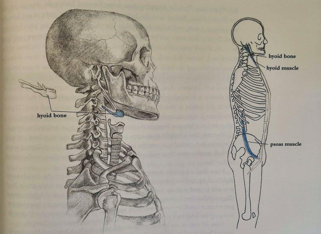 kość gnykowa